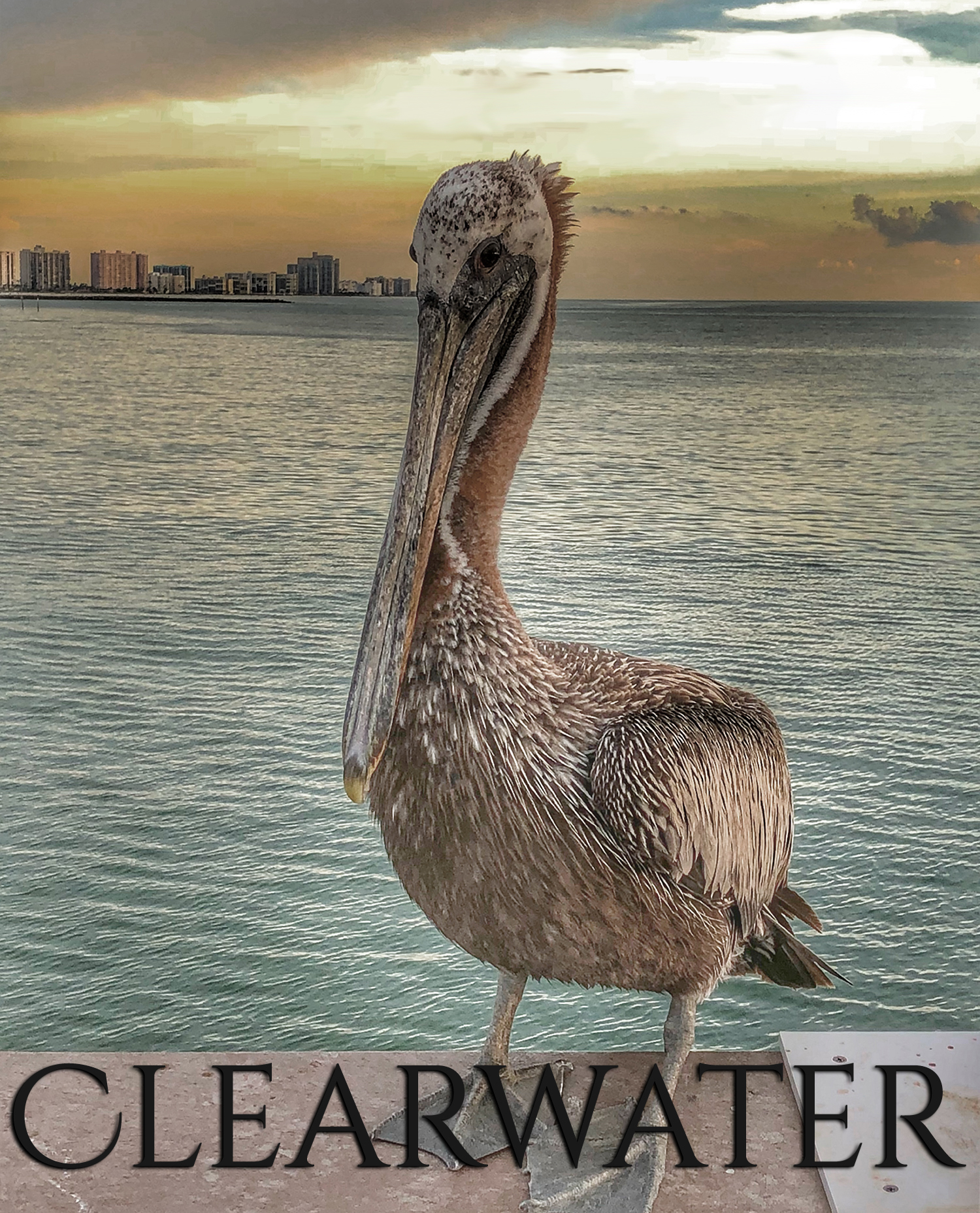 Clearwater Real Estate Homes Property